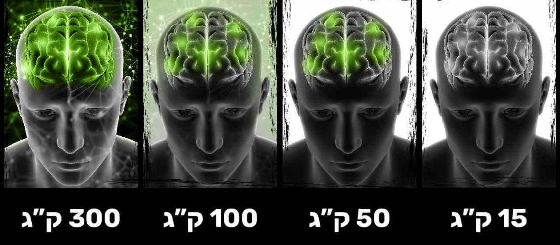 MY Box - מה שלא הולך בכוח הולך במוח